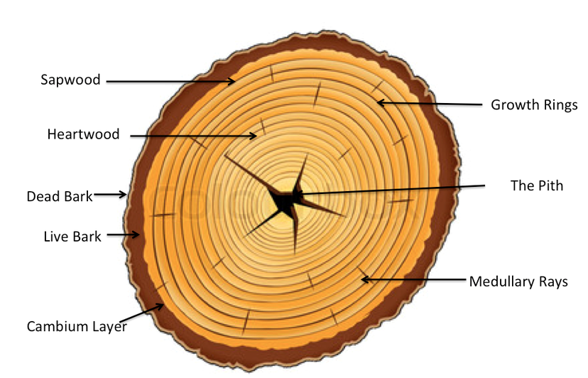 Types Of Cedar Lumber